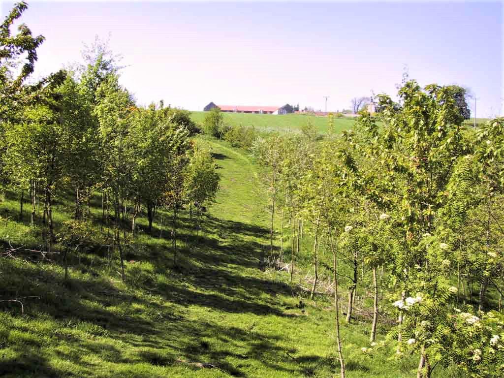 Woodland Carbon Units